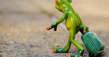 Bewerbung: Frosch reist zum Traumjob