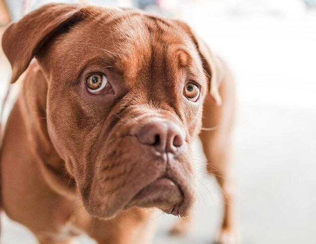 bettelnd in die Kamera blickender Hund