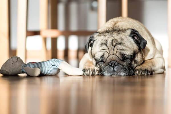 Hund im Büro mit Kuscheltier in seiner Ruhezone