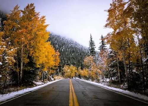 Selbstständig machen Straße im Wald