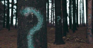 Nach der Schule Bäume im Wald mit Fragezeichen
